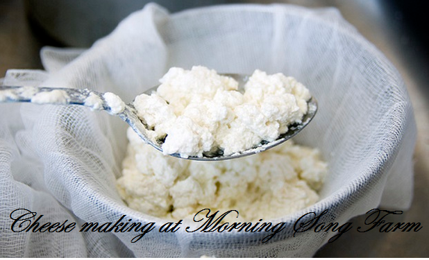 cheese-making-at-morning-song-farm-full-width